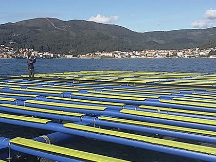 Standard mussel raft