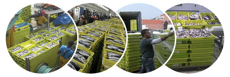 cadena comercial de las cajas de pescado