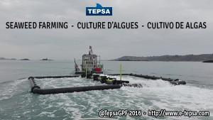 Estructura flotante para cultivo de algas marinas