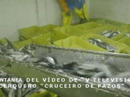 Vídeo de un cerquero pescando sardina