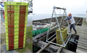 jaulas con puerta para cultivo en batea de erizo de mar