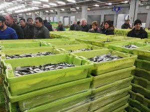 Cajas con bocarte costera 2017 en ondarroa