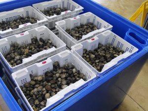 Cajas de plástico perforadas, reutilizables, anidables y compatibles en apilamiento