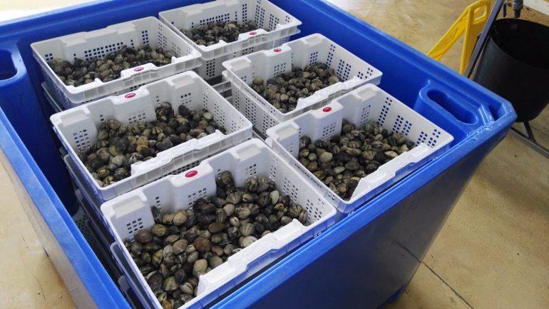 cajas de plastico para almejas
