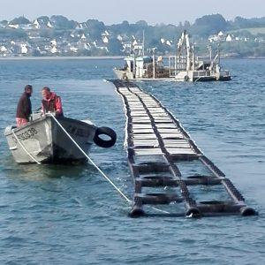 longline para cultivo de ostra en mar abierto