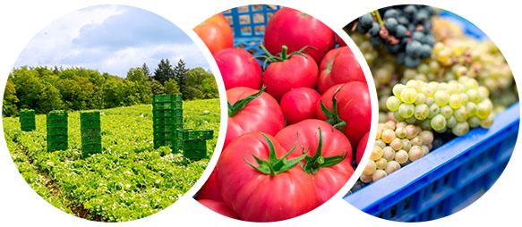 tres fotos de cajas con fruta y verdura