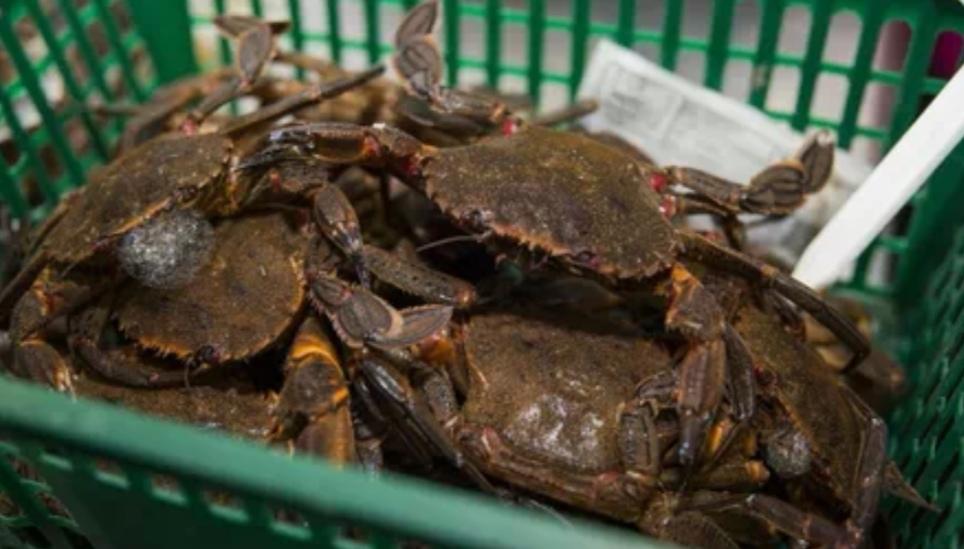 Cesto con tapa para crustaceos