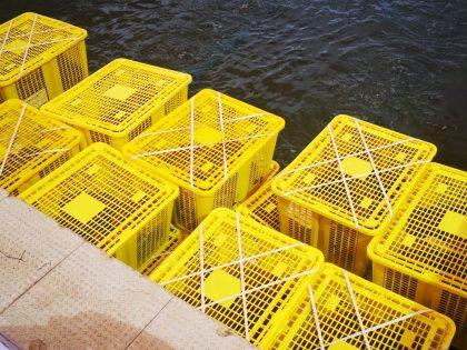 Reusable shellfish crates