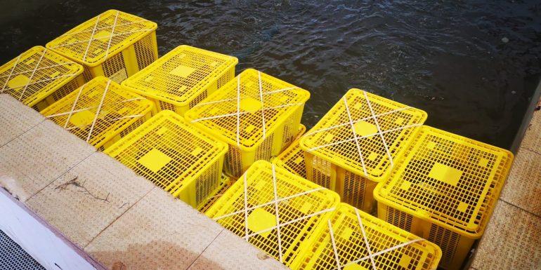 Cestas para marisco en el agua