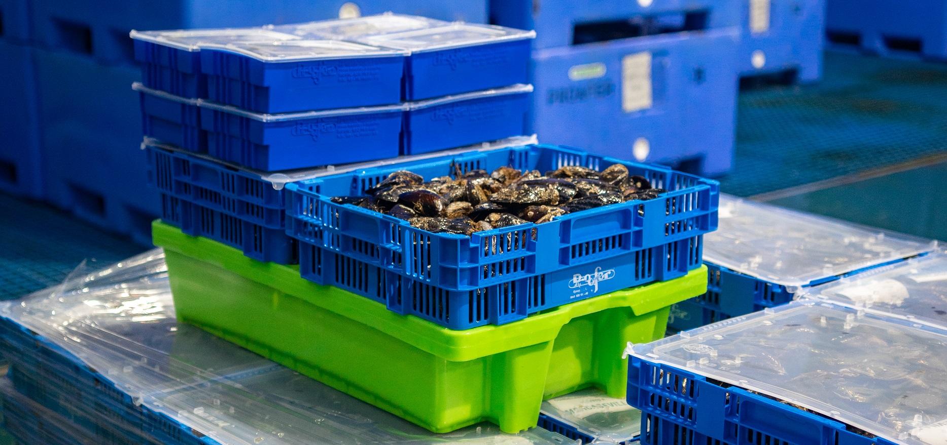 Cajas de plastico en depuradora de mariscos