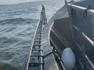Offshore oyster farming system