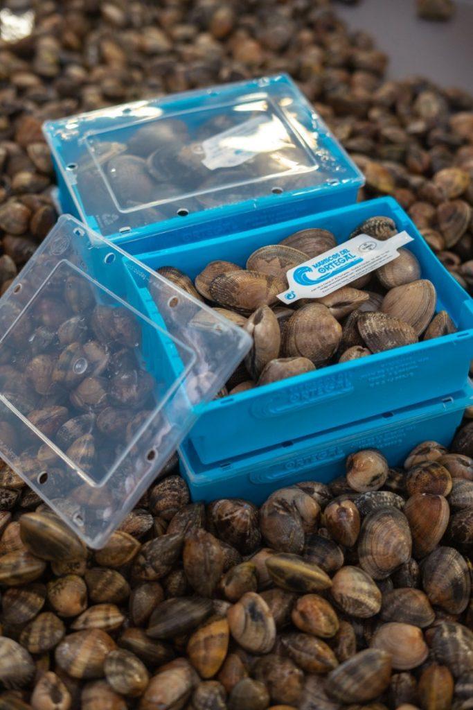 Cajas de plastico azules con tapa transparente con almejas dentro y alrededor