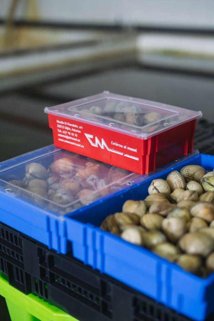 Cajas de plastico de diferente tamaño apiladas, contienen berberechos.