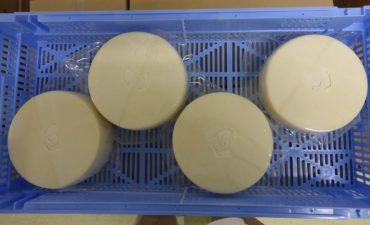 Caja de plastico azul con cuatro quesos dentro